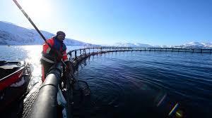 farm-raised salmon farm in Norway