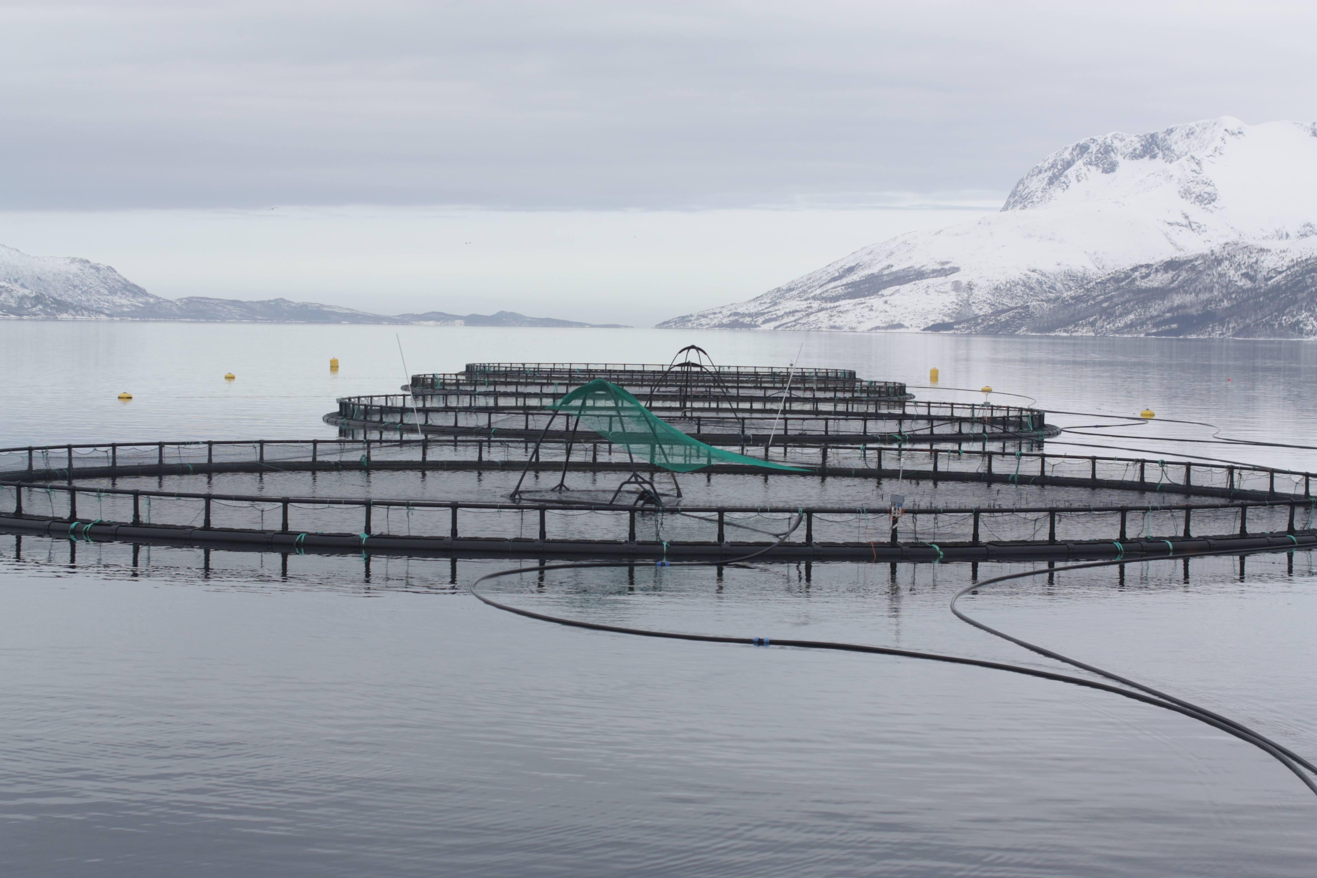 farm-raised salmon offshore aquaculture