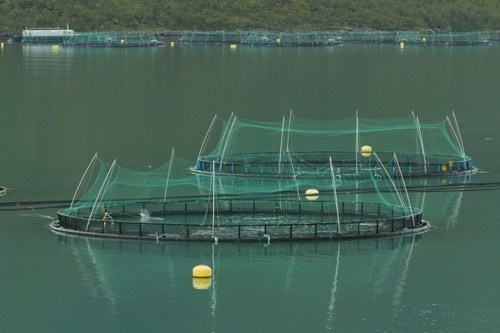 Fish_farming_in_Torskefjorden,_Senja,_Troms,_Norway,_500px